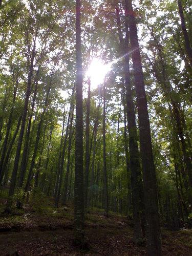 Pădurea Măgura din Bacău