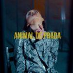 Videoclip Carla's Dreams Animal de Prada