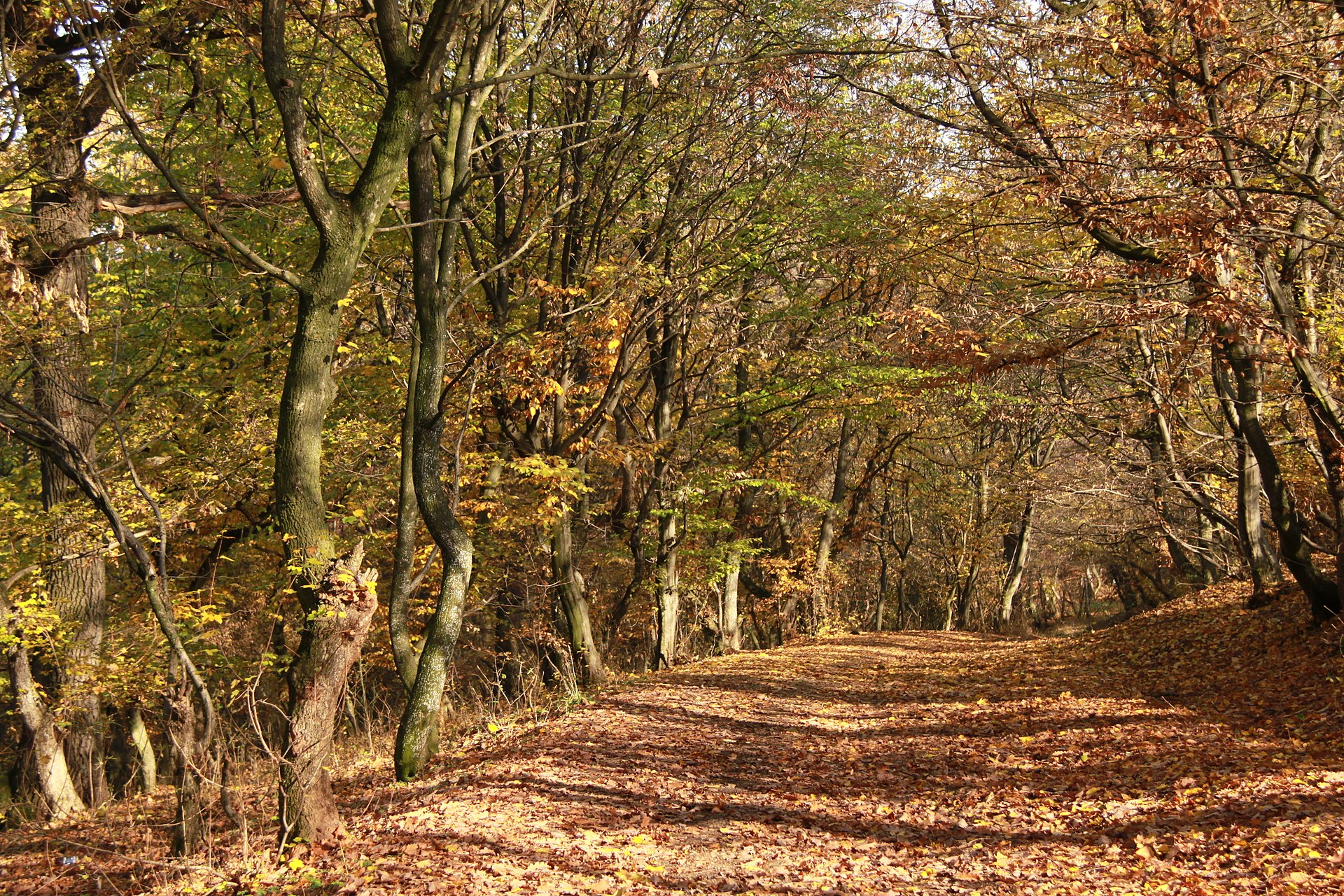 Pădurea Hoia-Baciu (Cluj-Napoca) din Cluj-Napoca