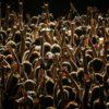 """Un festival de muzică rock are loc în Wisconsin, """"Herd Immunity Fest"""" a fost denumirea inițială a evenimentului"""