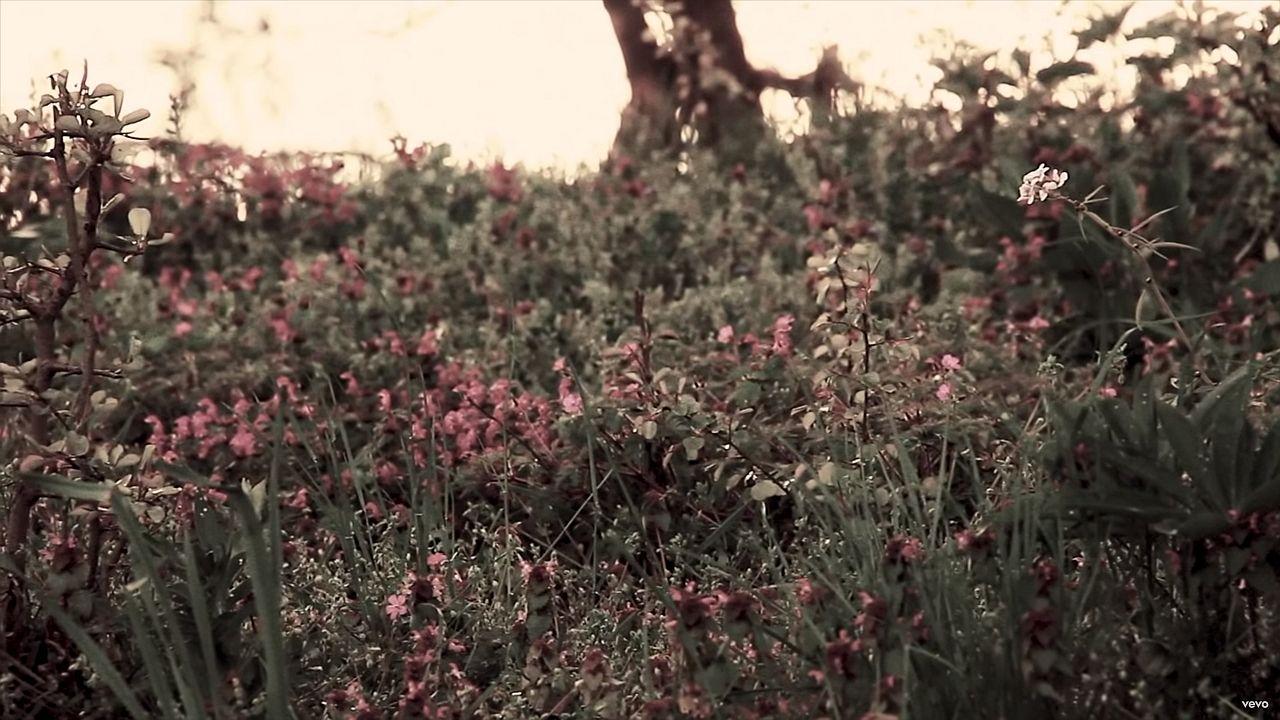 Lyric Video Taylor Swift The Lakes