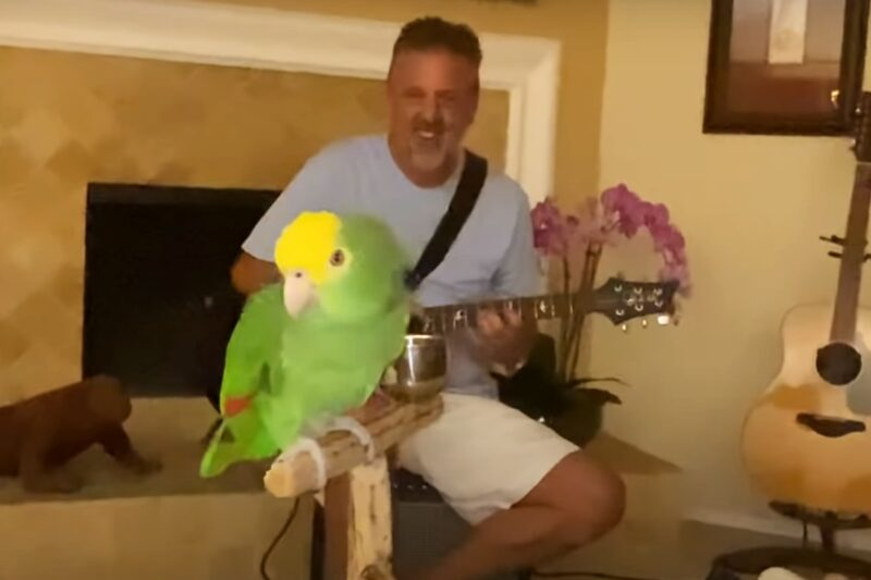 Papagalul Tico, alături de stăpânul său, Frank Maglio