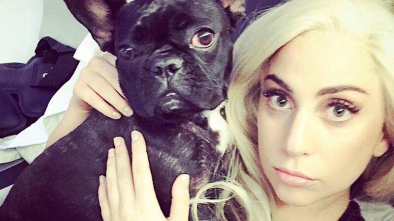 Lady Gaga alături de unul dintre cei trei buldogi francezi
